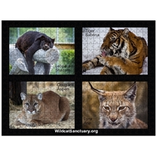 Shazam, Sabrina, Aspen and Aria Wildcat Sanctuary