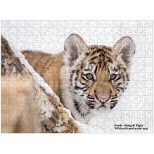 Tiger Dash Wildcat Sanctuary