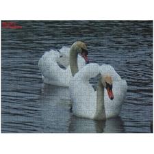 Stunning Swans